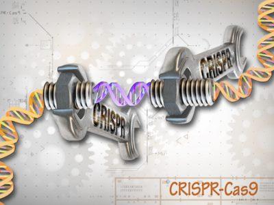 Can Crispr-Cas9 Boost Intelligence?
