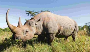 See Rhinos in the Wild on Three Tours with International Expeditions