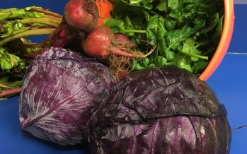 Ninety-year record for world's heaviest red cabbage beaten