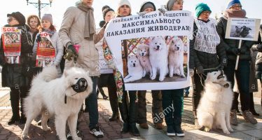 International rally for stricter laws against animal cruelty