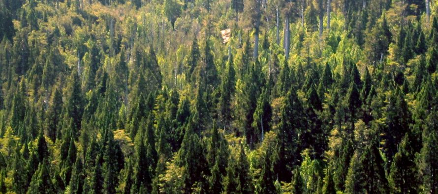 Canada protects largest coniferous forest in the world