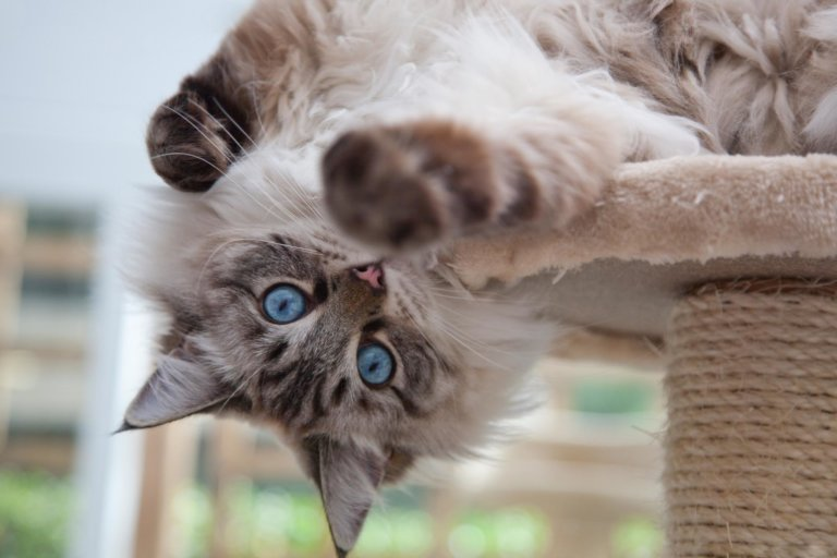 When it's a cat's life… Look inside a five star cattery