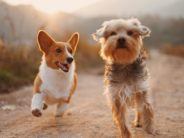 Choosing a Pet for Your Lifestyle and Health