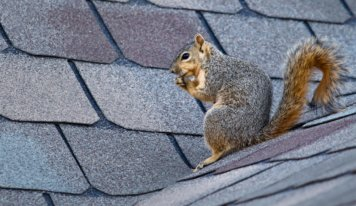 Tips To Prevent Squirrels From Damaging Your Roof